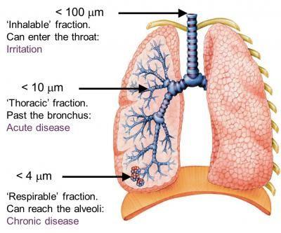 Effets pulmonaires des cendres volcaniques en fonction du niveau de pénétration dans les voies respiratoires - Doc USGS