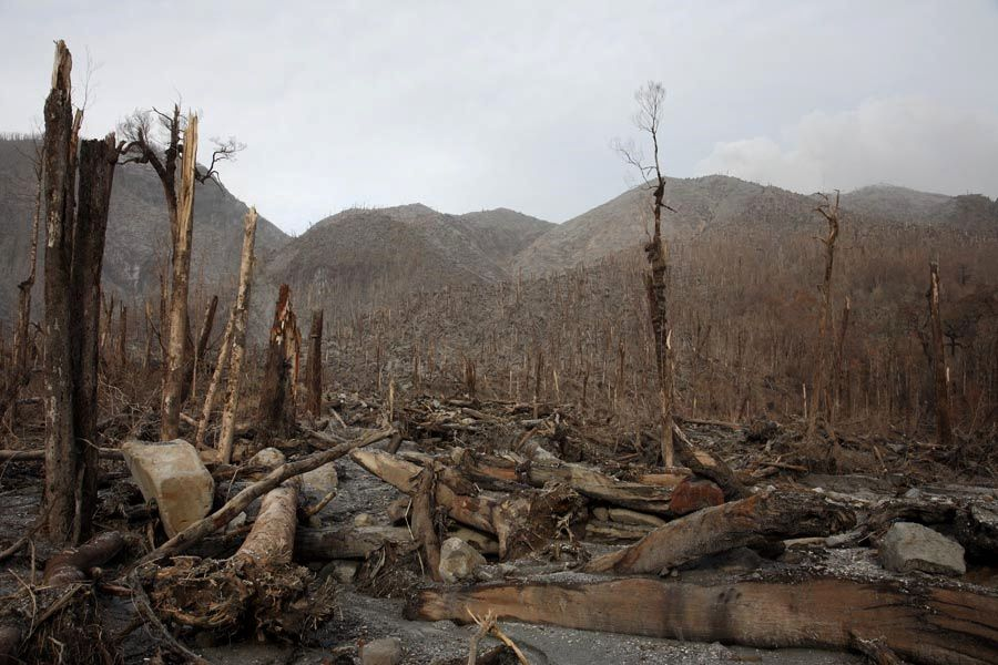 Chaiten north flank - damage to the forest following pyroclastic flows in 2008 - photo R.Roscoe / Photovolcanica via LAVE.be