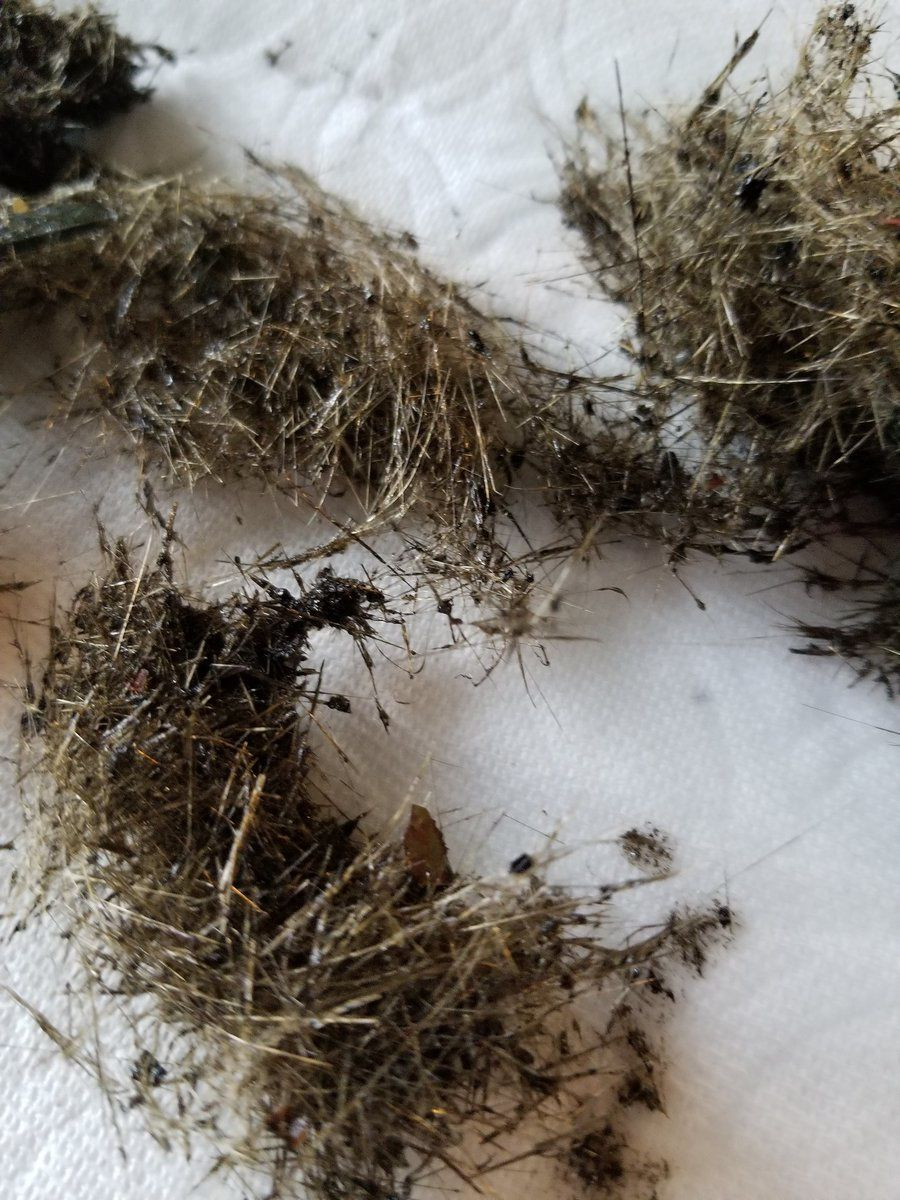 Kilauea East rift zone - hair and tears of Pelé recovered in the rainwater recapture tank on June 1 - photos 2018.06.01 / Pele's Phoenix Twitter