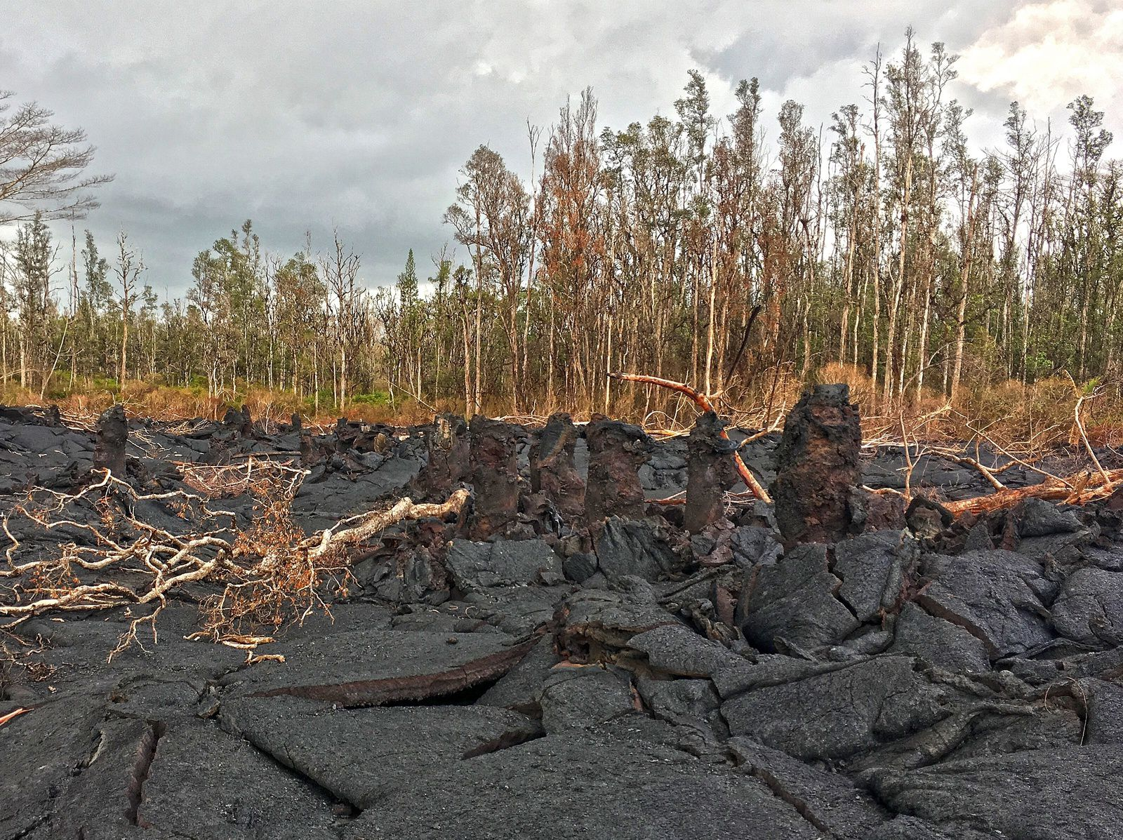 "Kilauea East Rift Zone - Lava trees, shown here in a fissure 8 flow, are formed when lava inundates a forested area and surrounds the tree trunks. Lava cools against the trunk, forming a column of rock and eventually burning the tree. As the lava flow deflates, the rock surrounding the trunk is left standing above the flow surface, forming a ""lava tree"" and showing the high-stand of lava that flowed through the area."