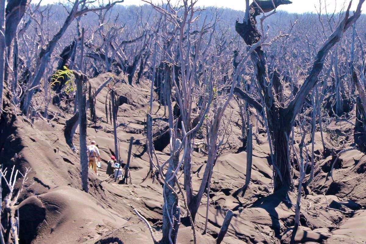 Ambae under the ashes ... only a few leaves remain green above the observers, to the left of the photo - Vanuatu Daily Post / Philippe Carillo doc.