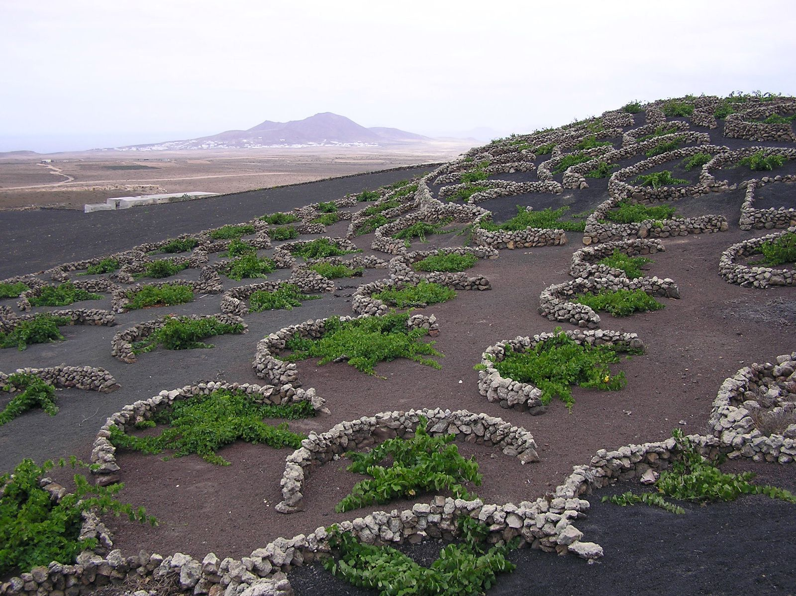 Canary Islands, Lanzarote - La Geria - photo La Geria vines