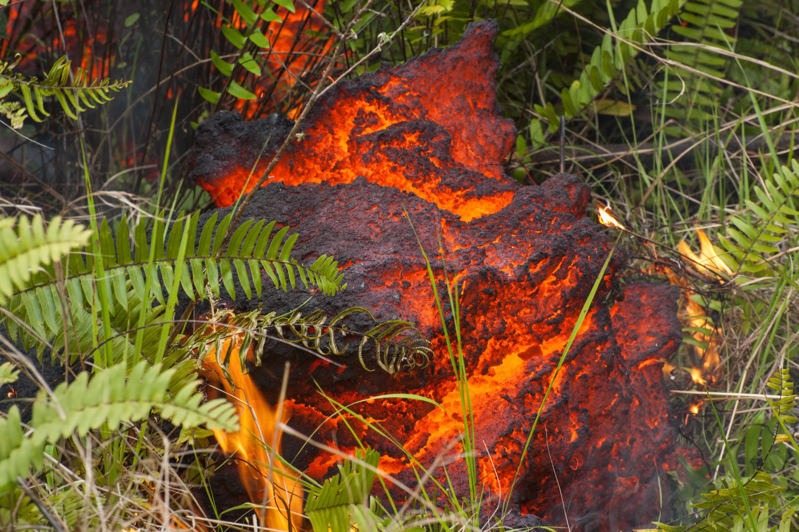 Piton de La Fournaise - lava in contact with pioneer ferns, living their last moments - photo © Thierry Sluys 26.10.2019