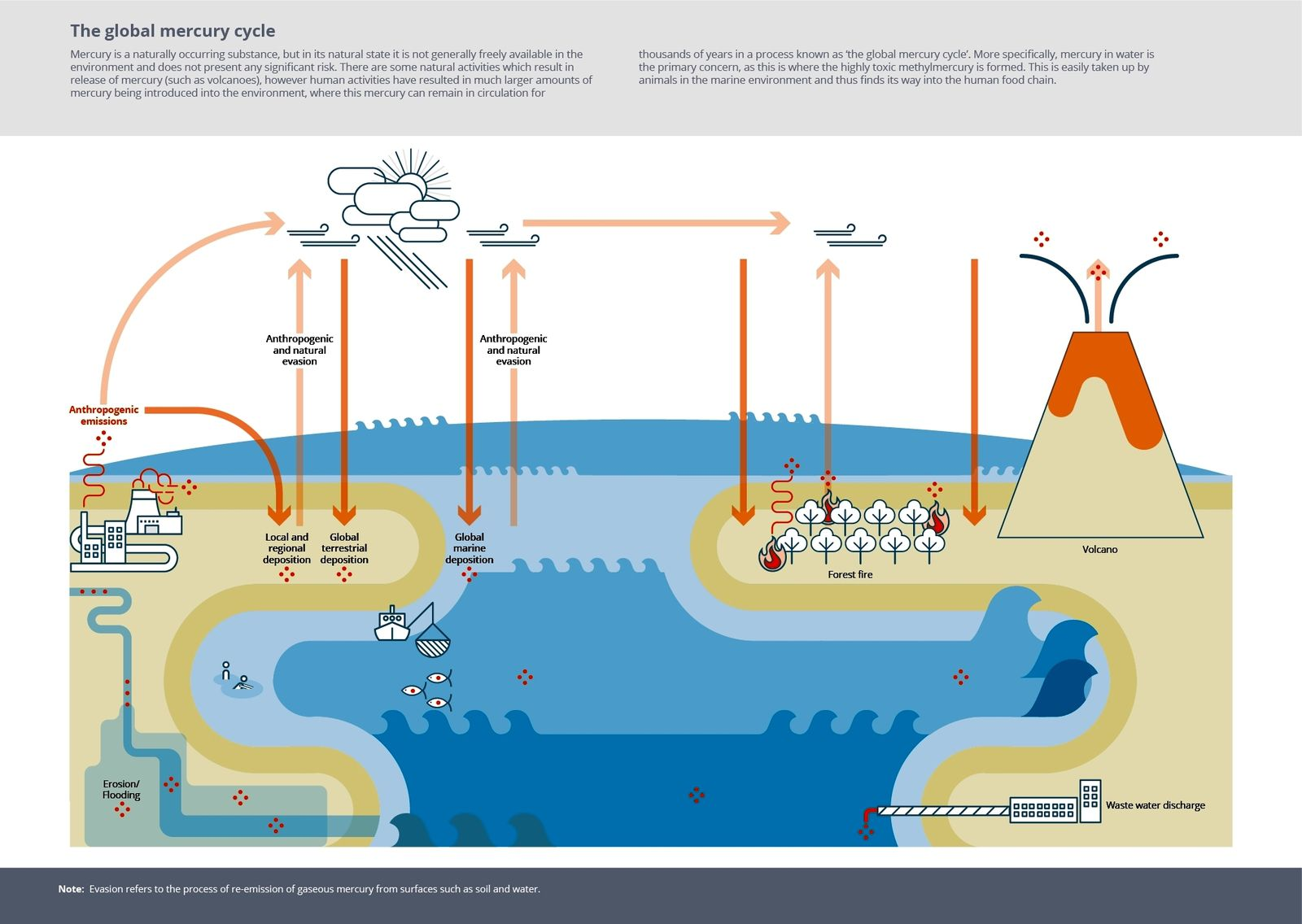 Conceptual diagram of the biogeochemical cycle of mercury in which the different contributions to the terrestrial ecosystem from different sources (natural and anthropogenic) are represented. Image credit: European Environment Agency (EEA) / via INGVvulcani - one click to enlarge