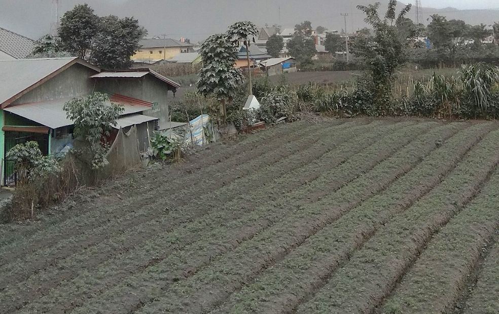 Sinabung - 14.08.2020 / 10h32 WIB - les cendres recouvrent la campagne environnante -  photo Magma Indonesia