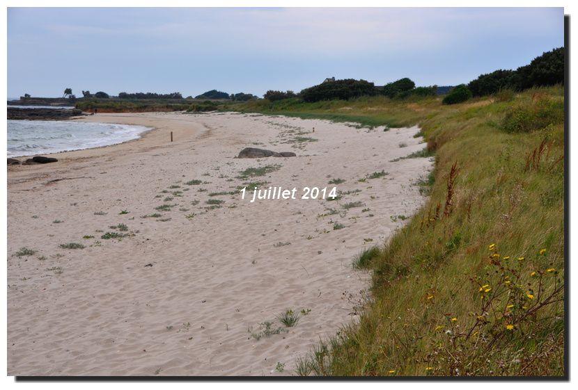 La plage se végétalise