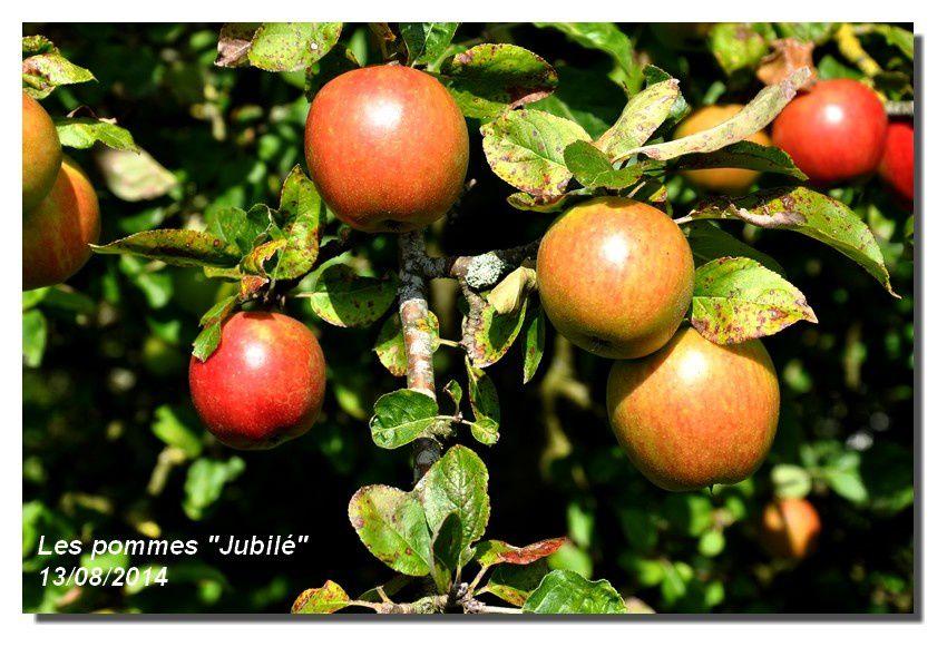 """Les pommes """"Jubilé"""" et d'autres"""