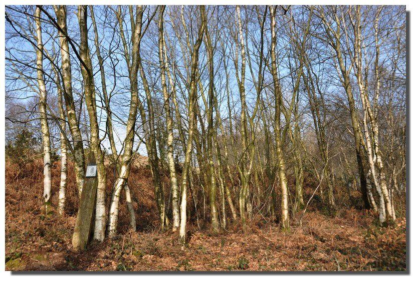 Val de saire, les paysages (3) : landes et bois