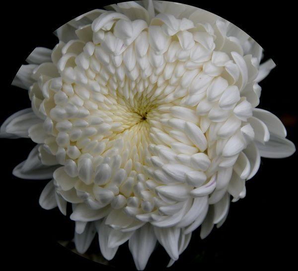 Fleurs et couleurs de Toussaint