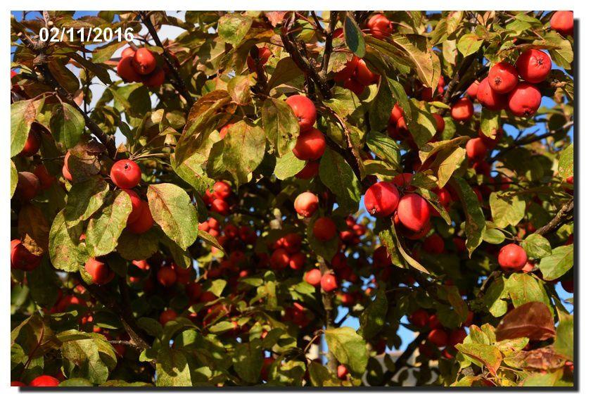 Les fruits rouges de Montfarville