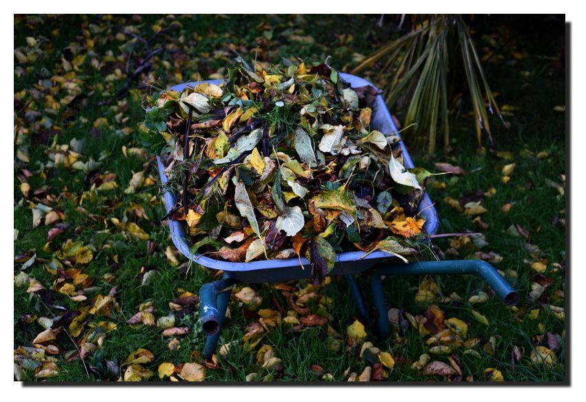 Les feuilles mortes se ramassent à la brouette