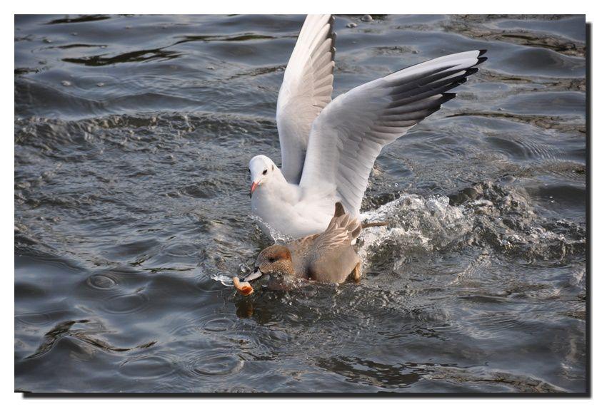 Entre terre et mer, bataille fluviale