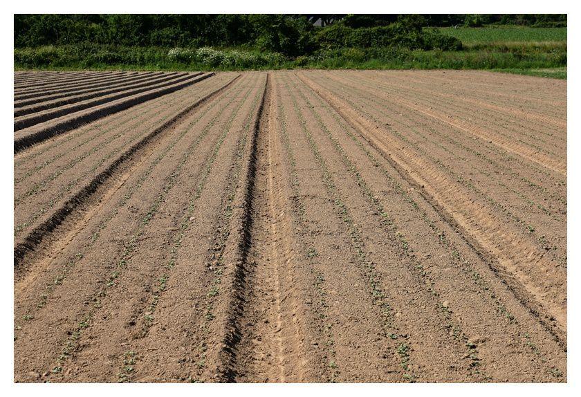 Des semis et plantations en cours