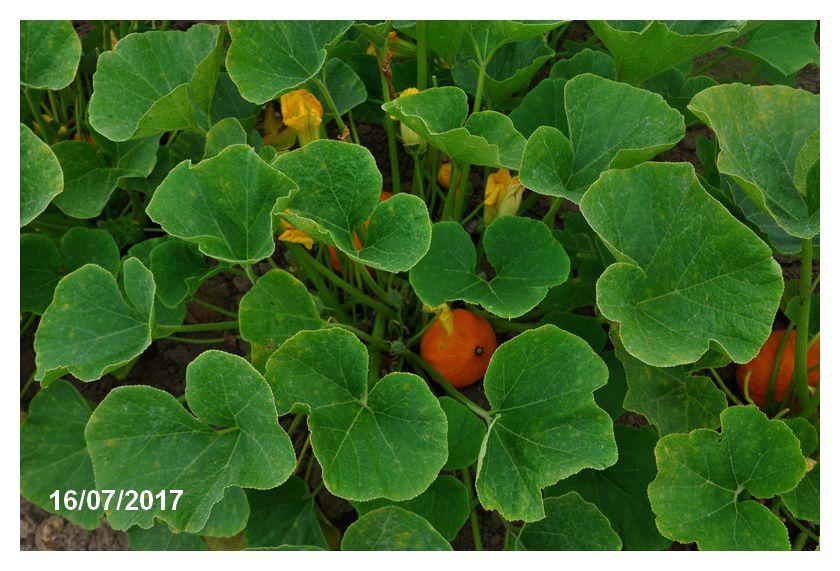 Soupes d'automne : elles poussent