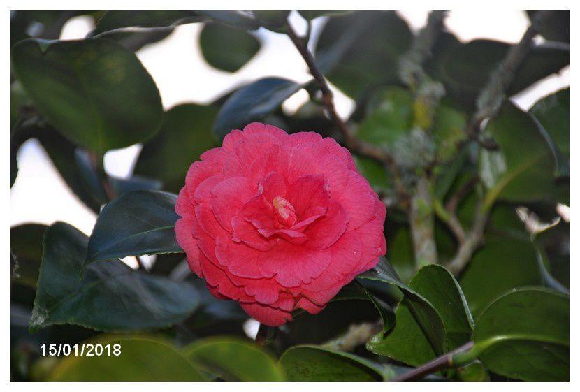 Toujours de la couleur, rouge et rose