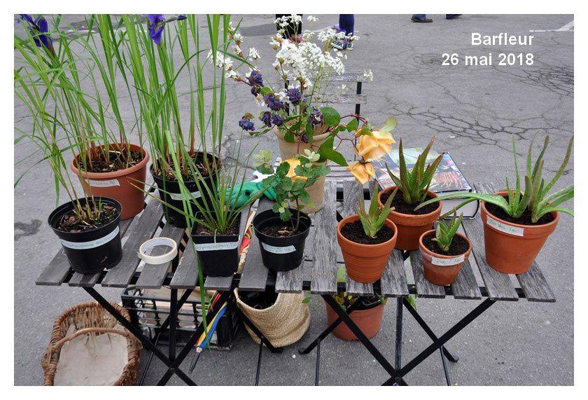 Barfleur, vide-jardin
