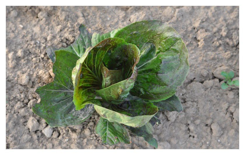 Une salade de salades
