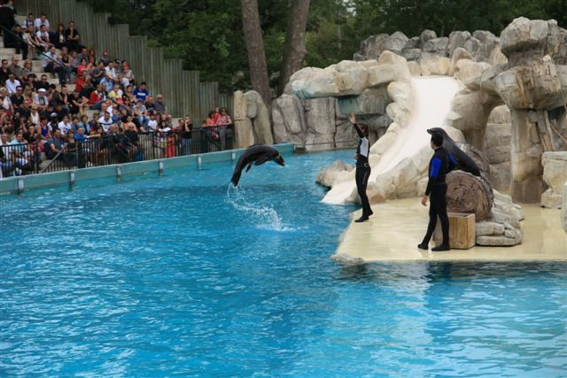 Zoo de Beauval : spectacle des otaries