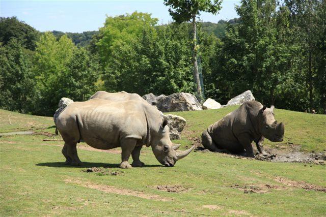 Zoo de Beauval : la savane africaine avec les rhinocéros