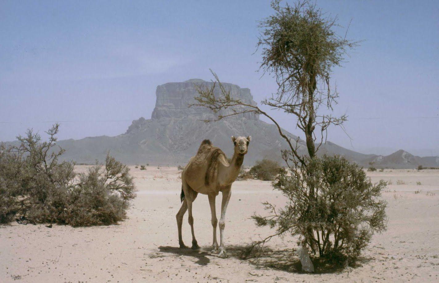 Dans le désert du Rub al-Khali