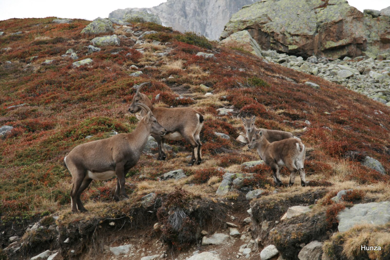 Randonnée dans les Alpes de Chamonix au col des Montets par le lac Blanc
