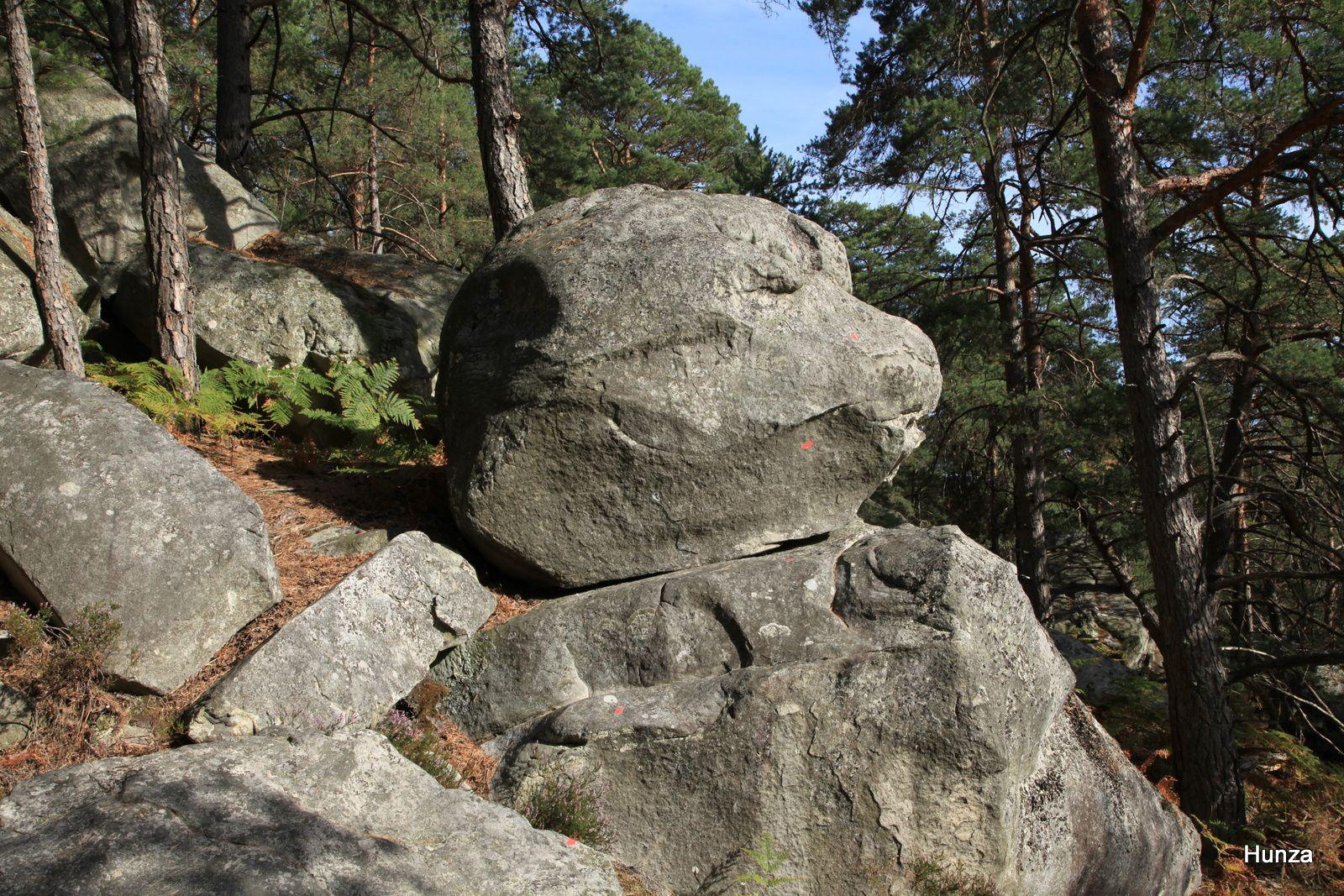 Franchard - La Cuisinière, un rocher en forme de tête de chien