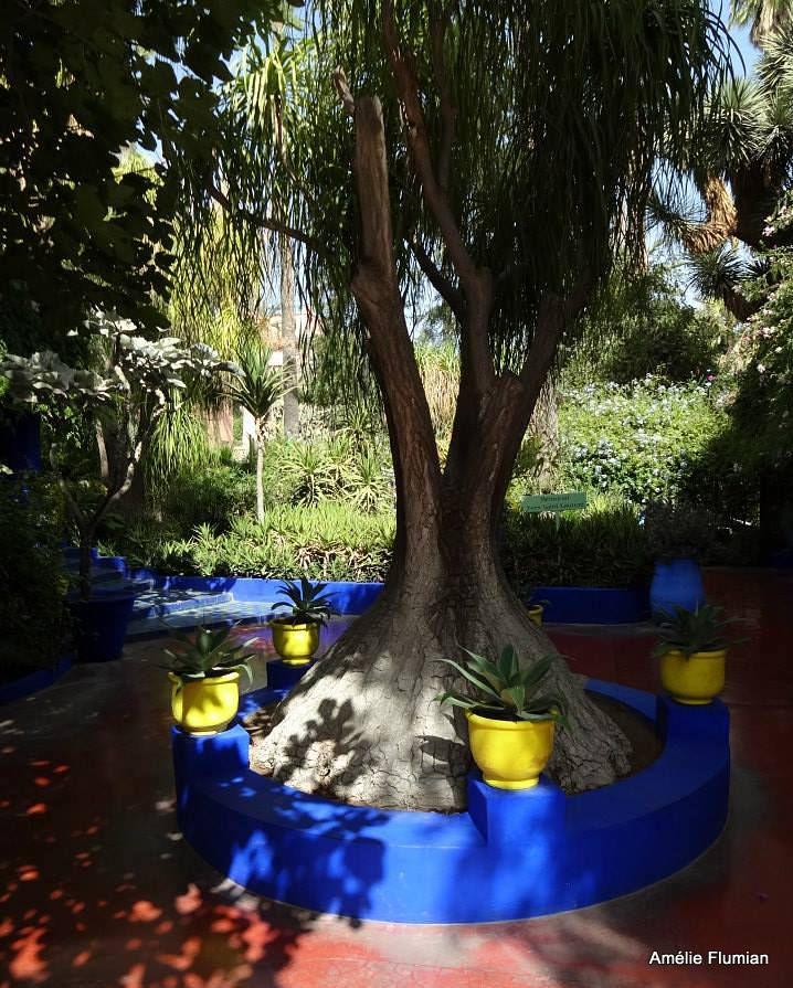 Marrakech, le jardin Majorelle
