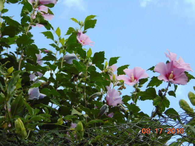 """Jardin """"Finca la Rédencion """" au 17/08/2018.Des Fleurs ,des Fruits....................."""