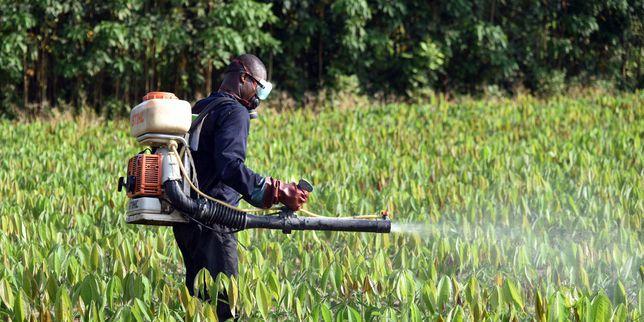 L'Union européenne et les pesticides. (Bravo Natacha Polony).