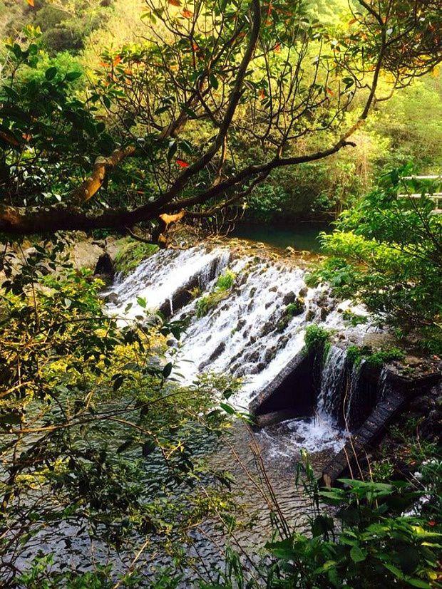 Corée du Sud - Île de Jéju - Le jardin botanique...