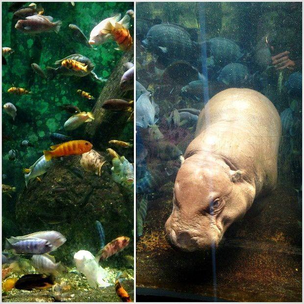 Doria aux Etats-Unis (13)...Chicago, Lincoln Park Zoo