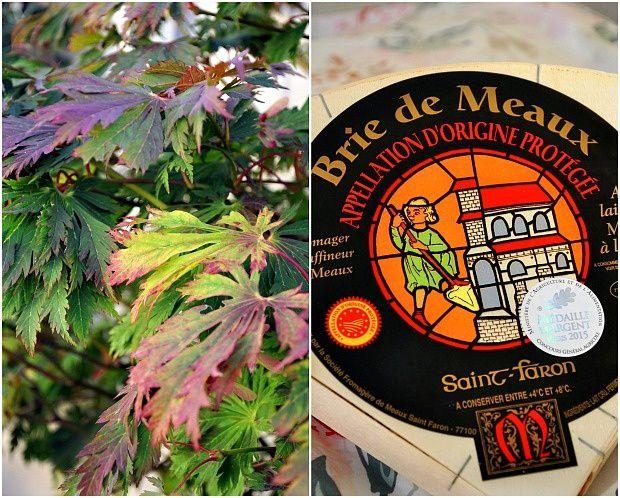 Gratin de chou-fleur au Brie de Meaux