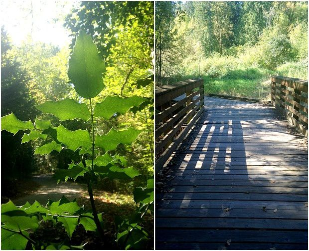 Doria aux Etats Unis dans l'Oregon (2016 - 16)... Rock Creek Trail