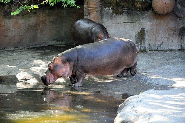 Doria aux Etats Unis dans l'Oregon (2016 - 15)... Zoo de Portland