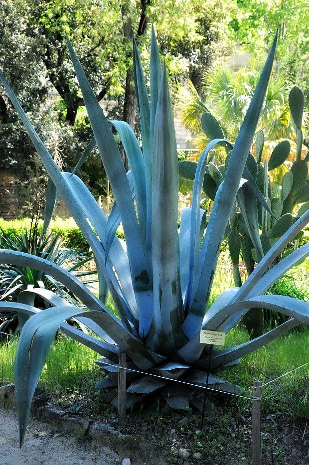 Week-End à Montpellier (2)... Jardin des Plantes