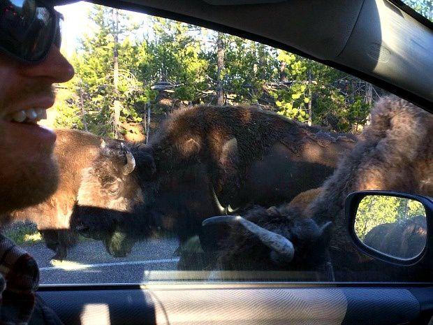 Les voyages d'Alexie : Parc National de Yellowstone