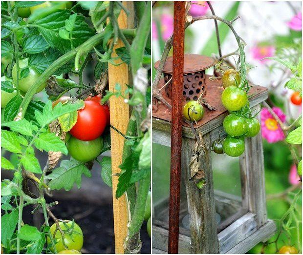 Fruits et légumes du jardin...
