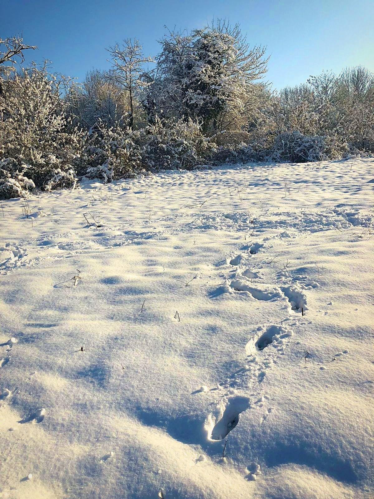 Meaux sous la neige (2)