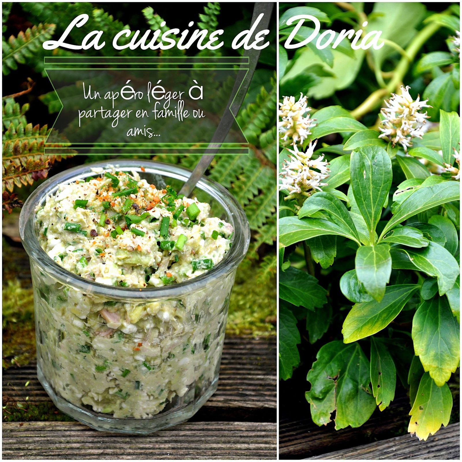 Rillettes de thon, avocat et cottage cheese