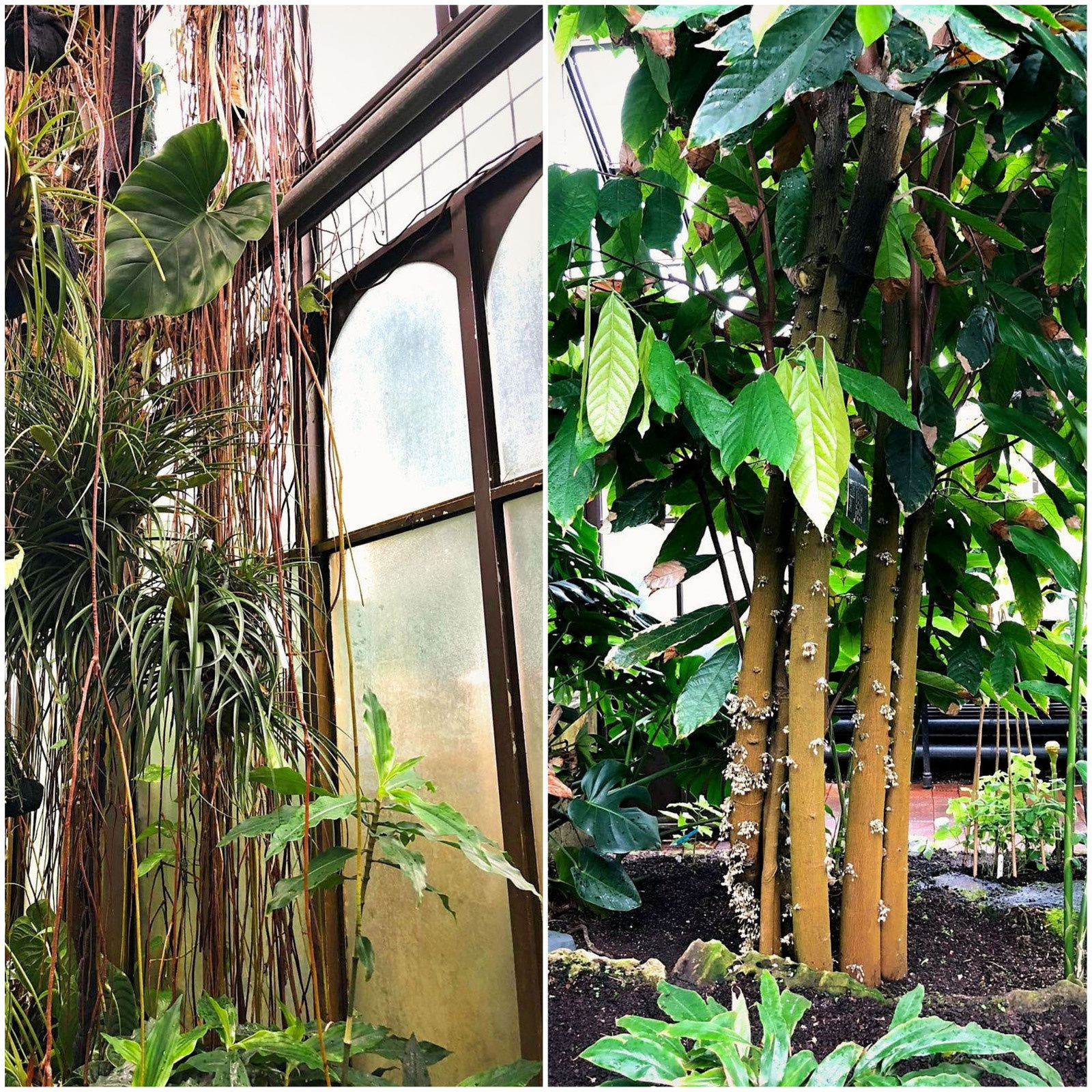 Road Trip en Ecosse... Botanic Garden of Glasgow