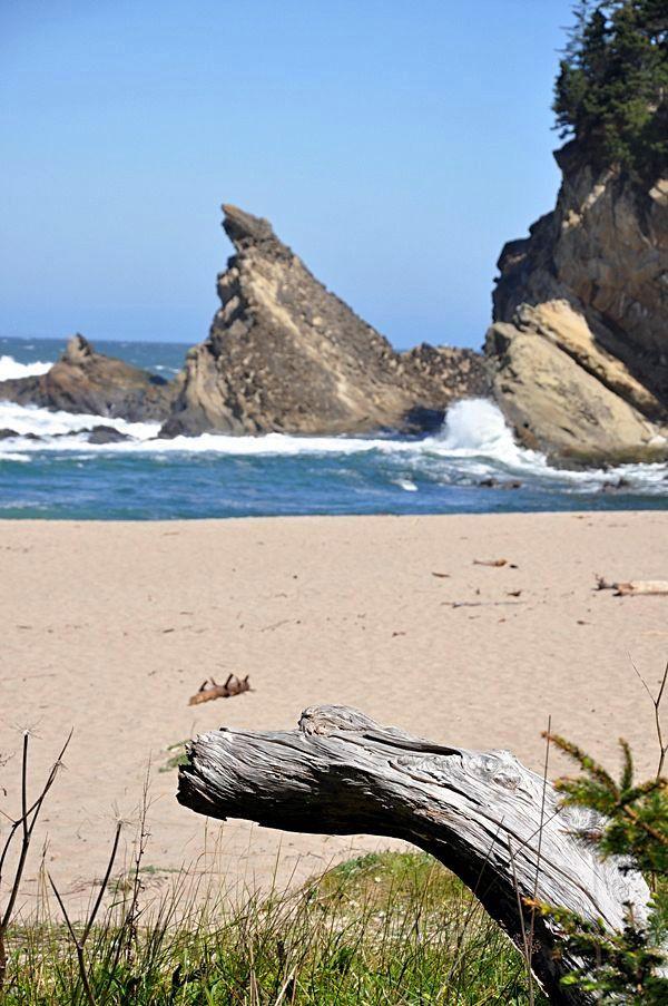 Road Trip sur la Côte Pacifique dans l'Oregon aux USA... (11) Shore Acres State Park