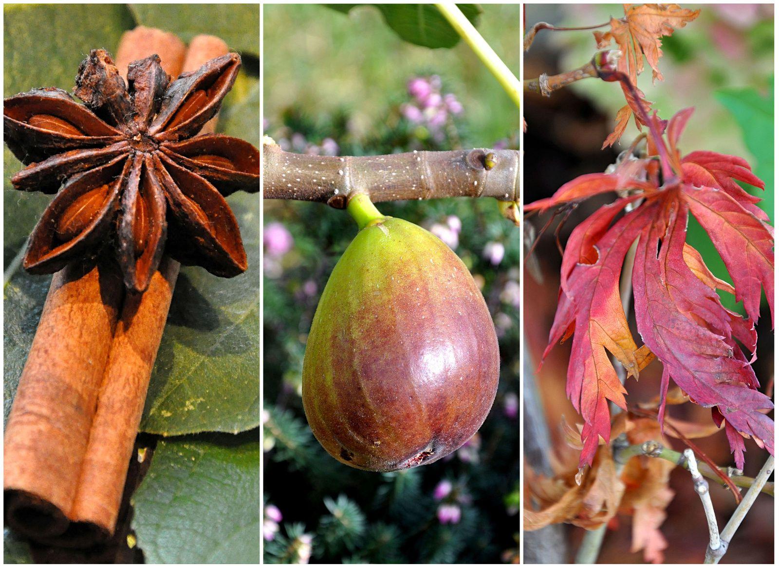 Confiture de figues, kiwis à la cannelle et étoile de Badiane