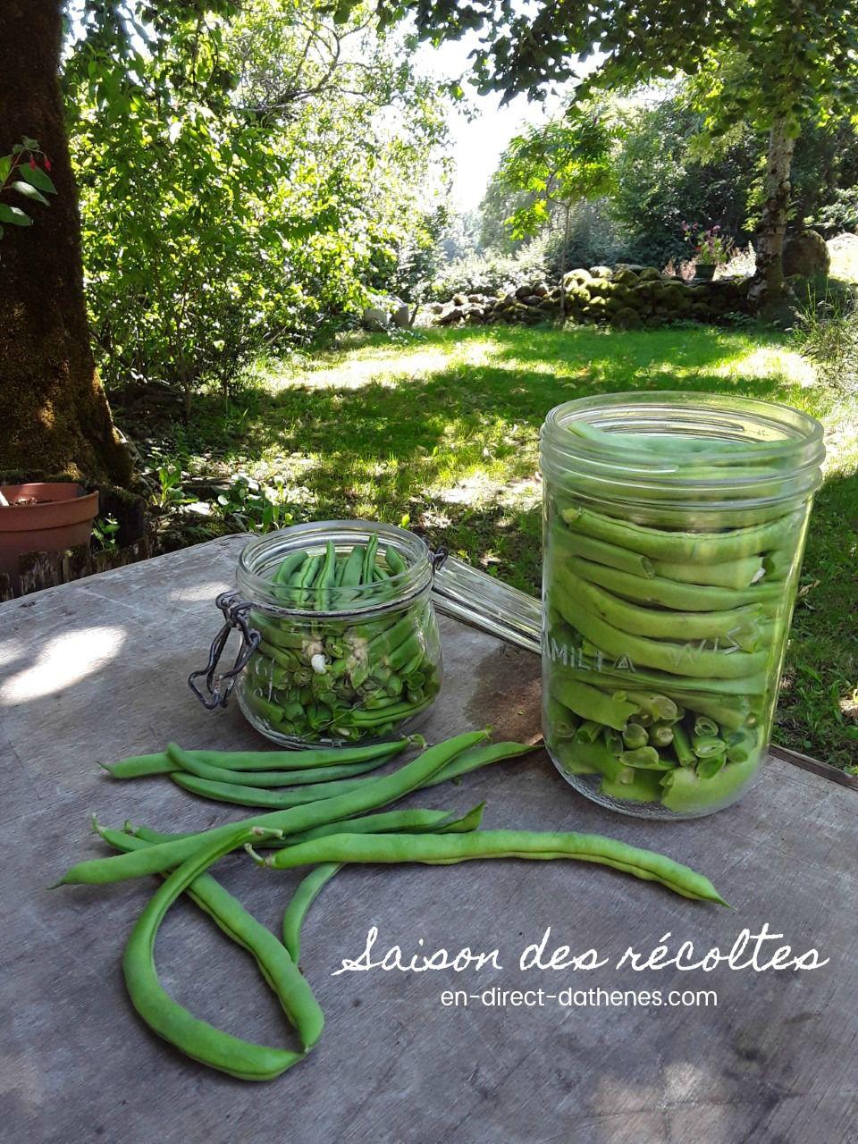 C'est la saison des conserves : les haricots verts à la grecque