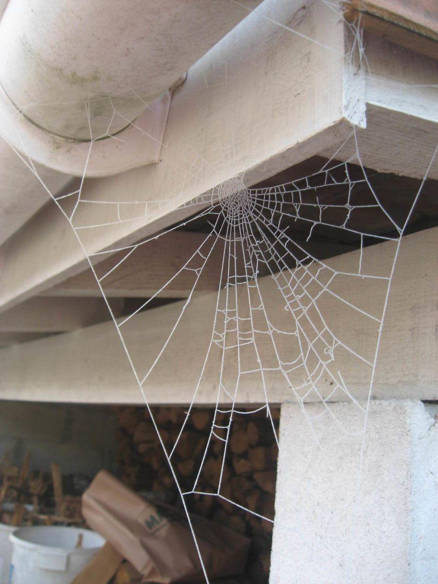 une toile d'araignée bien blanche