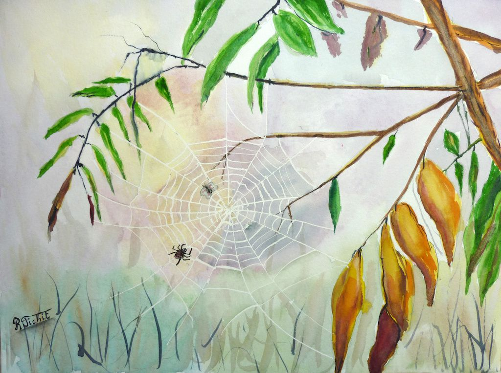 toile d'araignée_Robert_aquarelle