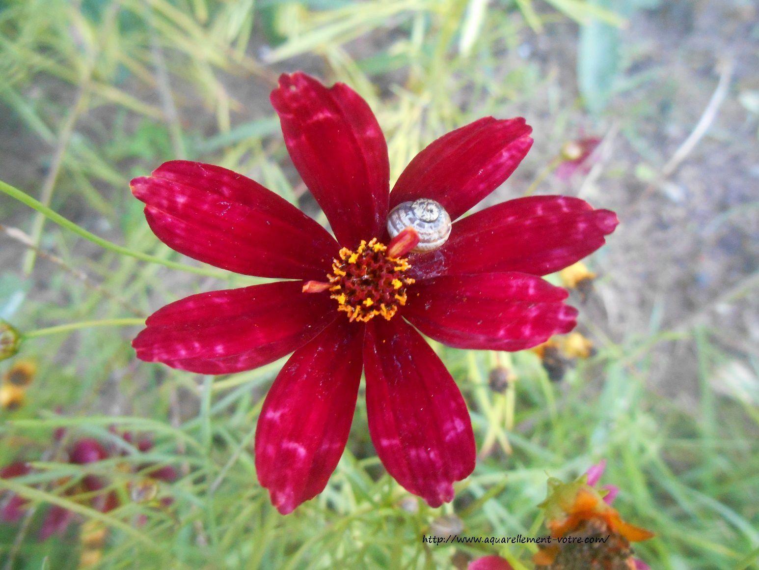 power flower celine