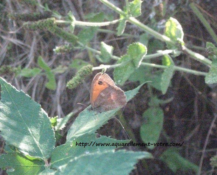 un joli papillon, qui n'arretait pas de s'envoler quand Aria approchait