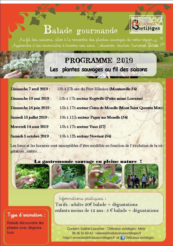 programme 2019 : Balades gourmandes découverte des plantes sauvages comestibles