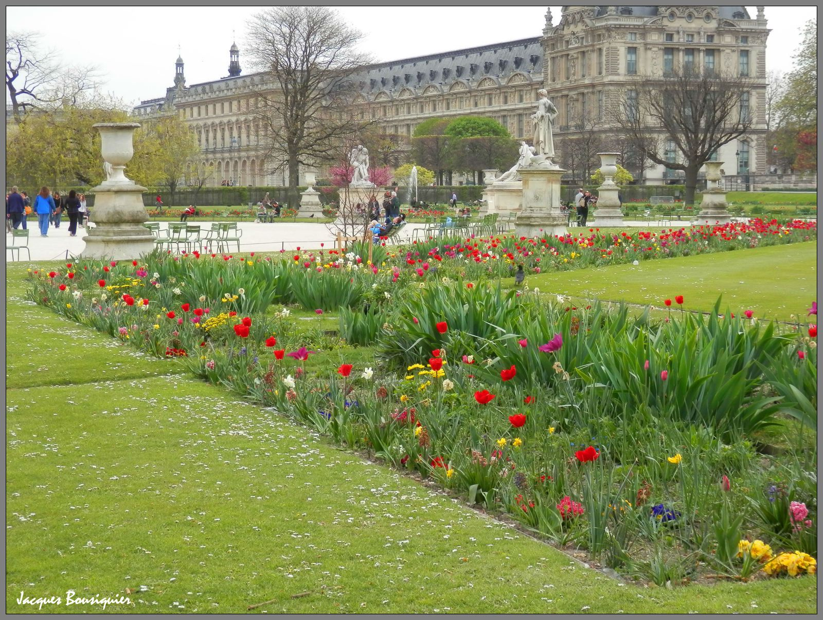Tulipes aux Tuileries