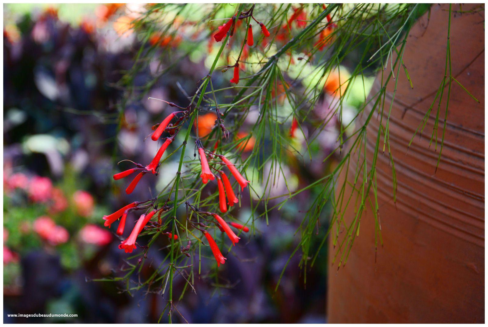 Photos de fleurs cueillies la semaine derniière dans les Îles Éoliennes, la toute dernière à Taormine.